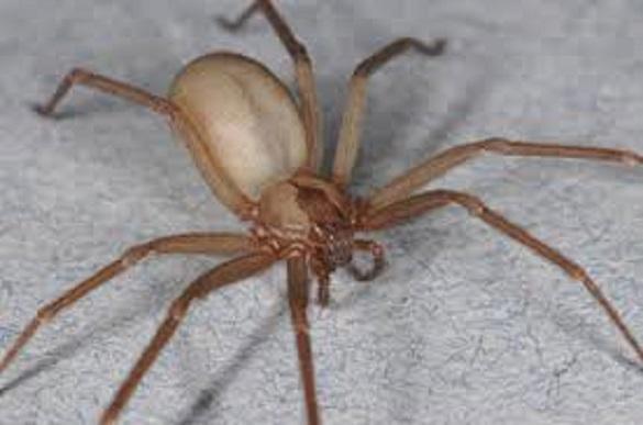 В Москве мужчина чуть не лишился руки после укуса паука. 395552.jpeg