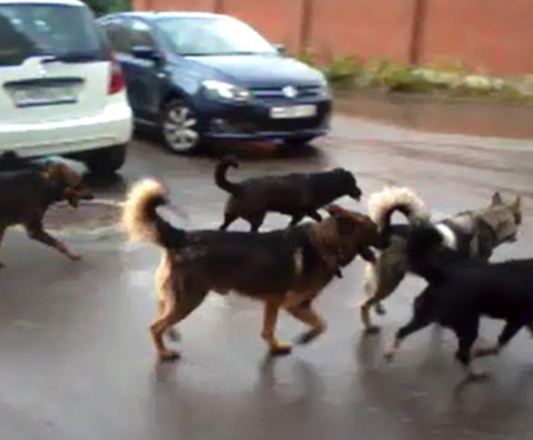 В Калуге нашли новое решение проблемы бездомных животных. 393554.jpeg