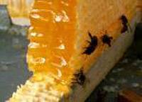 Праздник пчелам, людям пост