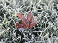 Прогнозы: москвичам обещана морозная погода. 249558.jpeg