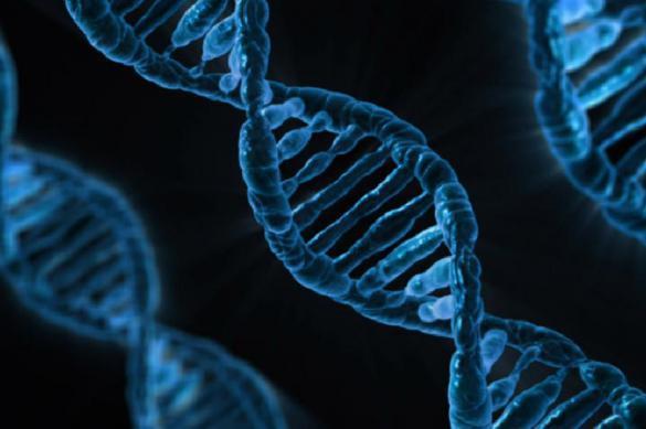 Ученые научились редактировать ДНК младенцев во время беременности. 393559.jpeg