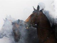 Лошади и верблюд эвакуированы из горящей московской конюшни. 249560.jpeg