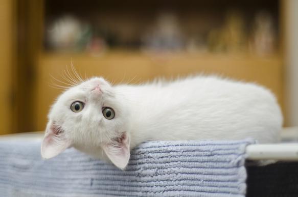 Зачем Вам нужна кошка?. 392560.jpeg