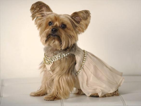 Одежда для собак: история возникновения собачьей моды. 394560.jpeg