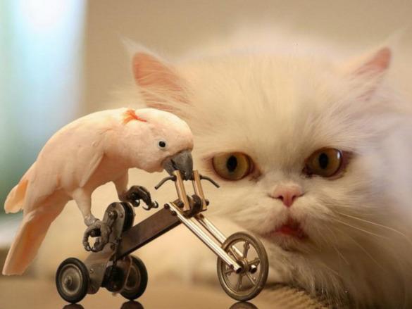 Как домашние животные влияют на психоэмоциональное состояние человека?. 394562.jpeg