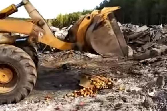 Хоть не расстреляли: спецназ ФСБ уничтожил ящик санкционных яблок. 391563.jpeg