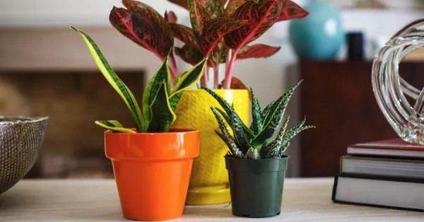 Четыре способа поливки цветов, когда вас нет дома и без помощи соседей. 404566.jpeg