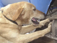 Собаку Юрия Гальцева отравили ядом. 249567.jpeg