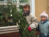 Новогодняя елка серьезно вредит здоровью. 251567.jpeg