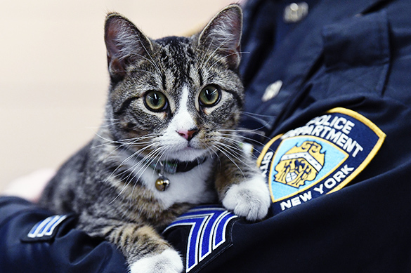 В США котенок официально принят на работу в отдел полиции. В США котенок официально принят на работу в отдел полиции