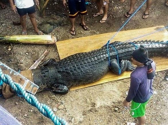 На Филиппинах поймали крокодила-убийцу. 395567.jpeg