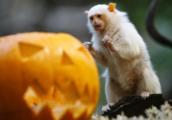 У животных тоже есть чувство юмора. Животные празднуют Хэллоуин