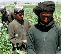 Наркотрафик из Афганистана не удается остановить