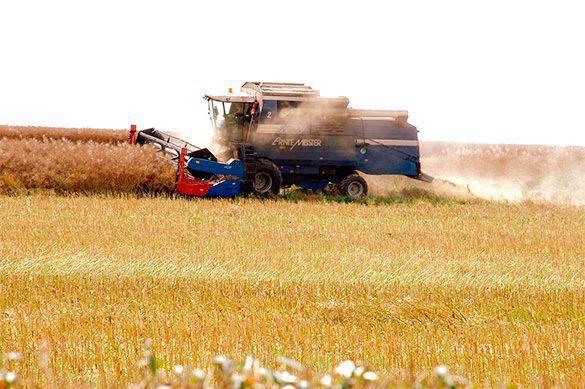 Российская Федерация заработает наэкспорте зерна восемь млрд. долларов