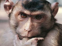 Дикая обезьяна помочилась на президента Замбии, когда он давал