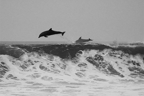 Массовую гибель дельфинов расследуют на Кубани и в Крыму