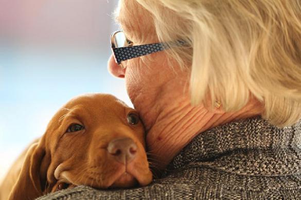 Собаки обнаруживают болезни лучше некоторых медицинских тестирований. 394578.jpeg