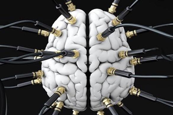 В псевдонаучные мифы о работе головного мозга верит большинство людей. 373579.jpeg