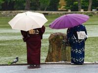 В Японии проливные дожди и оползни привели к жертвам