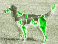собака. 242584.jpeg