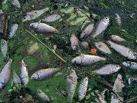 Отравленный японской радиацией тунец прибился к берегу Калифорнии. 259587.jpeg