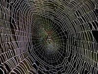 Исследователи проверили паутину Человека-паука на прочность. 281588.jpeg