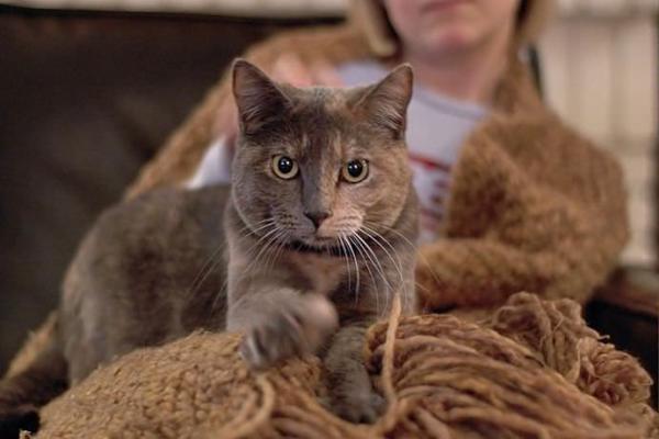 Почему коты любят топтать лапами хозяев?. 393588.jpeg