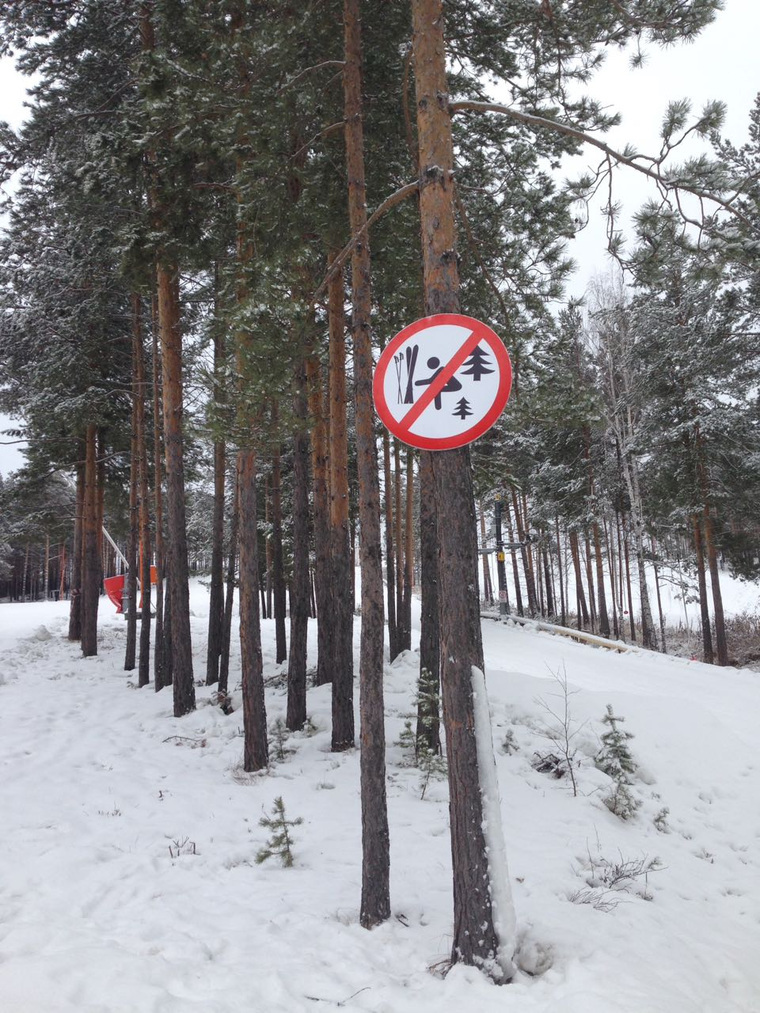 В свердловских лесах запретили ходить в туалет под елками. В свердловских лесах запретили ходить в туалет под елками
