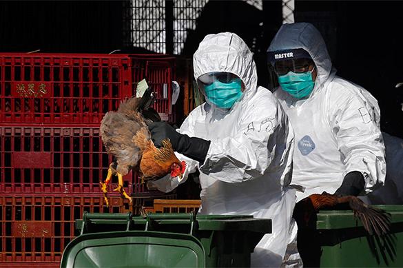 Российской Федерации угрожает опасный для человека птичий грипп
