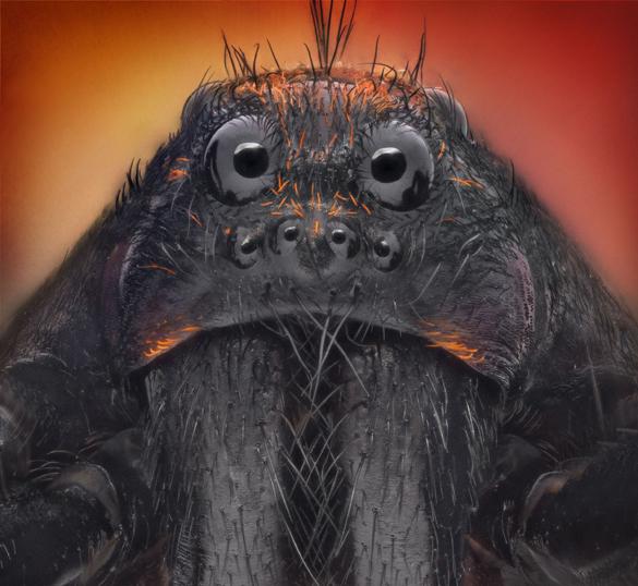 Ученые: Боязнь пауков у человечества сформирована эволюцией. Боязнь пауков у человечества