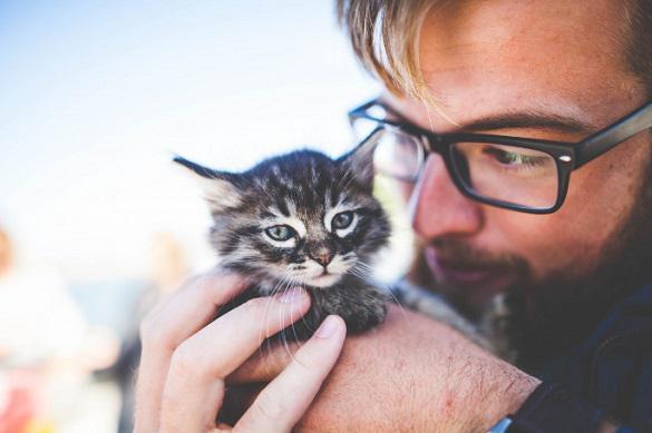 Ученые обозначили целебные свойства кошек. 397604.jpeg