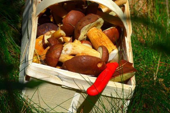 Как вырастить лесные грибы на даче. 399606.jpeg