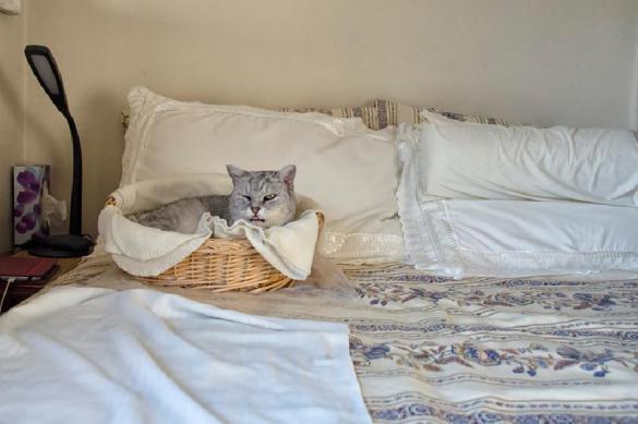 Ученые рассказали, как постельное белье может стать угрозой для здоровья. 381607.jpeg