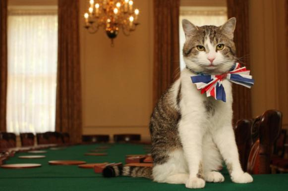 Главный британский мышелов кот Ларри не желает ловить мышей и крыс. Главный британский мышелов кот Ларри не желает ловить мышей и кр