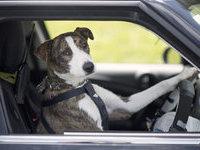 Собаки - водители сдали экзамены. 276614.jpeg