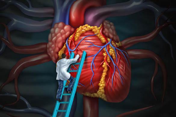 Российские ученые смогут хранить донорское сердце 24 часа. 389615.jpeg