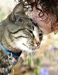 Кошки диктуют свою волю человеку