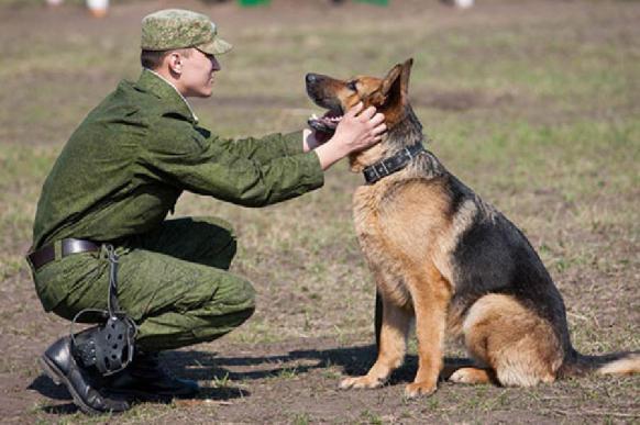 """Проверка у собаки таланта спасателя: """"поддельный обморок"""". 395620.jpeg"""