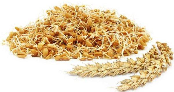 Пшеничное питание. хлопья из пшеницы