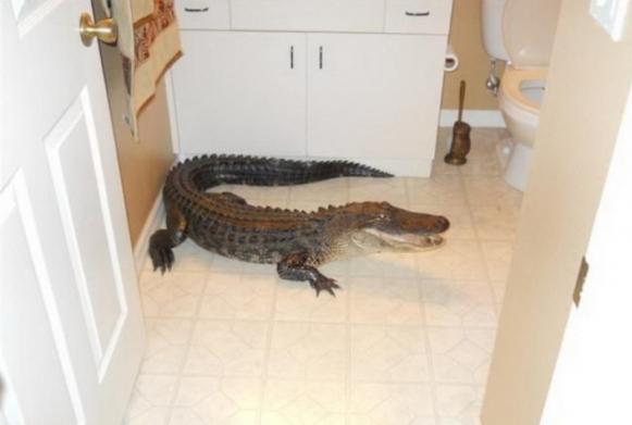 Домашние крокодилы: правила ухода и содержания. 394622.jpeg