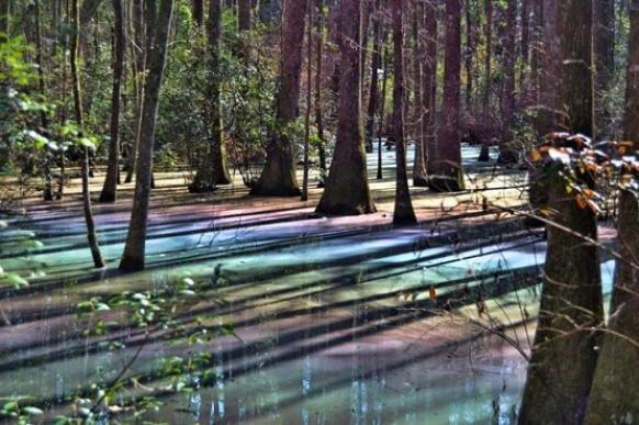 Очень красивое болото нашли в Виргинии. 396623.jpeg