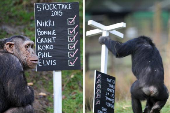 Шимпанзе превращаются в людей. 401624.jpeg