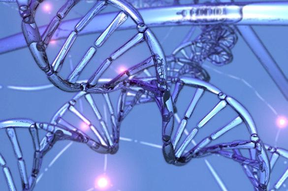 Ген долголетия ускользает от ученых. 303625.jpeg