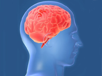 Пища, богатая белками, может уменьшить мозг
