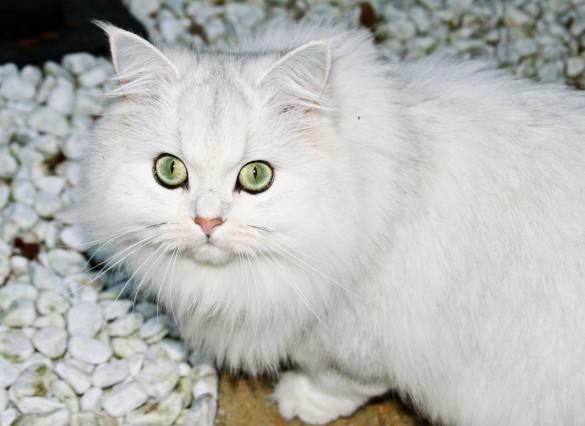 Косметика для животных: какую и как выбрать. 398629.jpeg