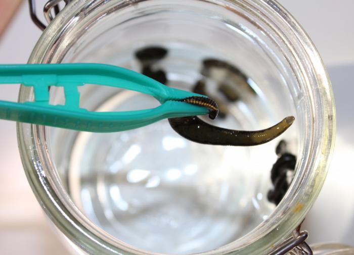 Виновники драки в мотострелковой дивизии понесли заслуженное