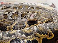 Житель Флориды выпустил в водосток змею
