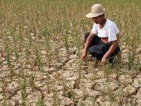 Засуха бьет по урожаю китайских фермеров. 236634.jpeg