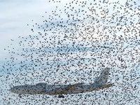 Птиц в новосибирском аэропорту будут пугать лазером. 236635.jpeg