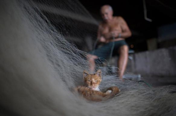 Рыбака оштрафовали и могут посадить. 393635.jpeg